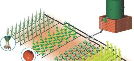 Drip Irrigation For Increased Vegetable Production