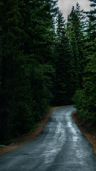 Road Through Forest Wallpaper - iPhone, Android & Desktop Backgrounds