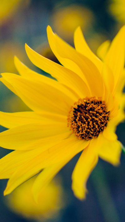 Yellow Flower Wallpaper - iPhone, Android & Desktop Backgrounds