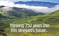 DIerberg - StarLane vineyard