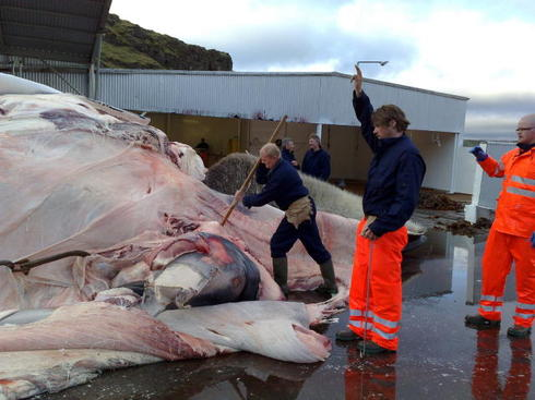 Norway Wanted To Send Whale Meat To Iceland