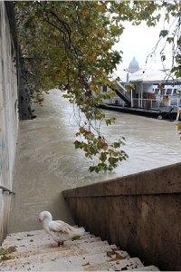 The Tiber breaks its banks.