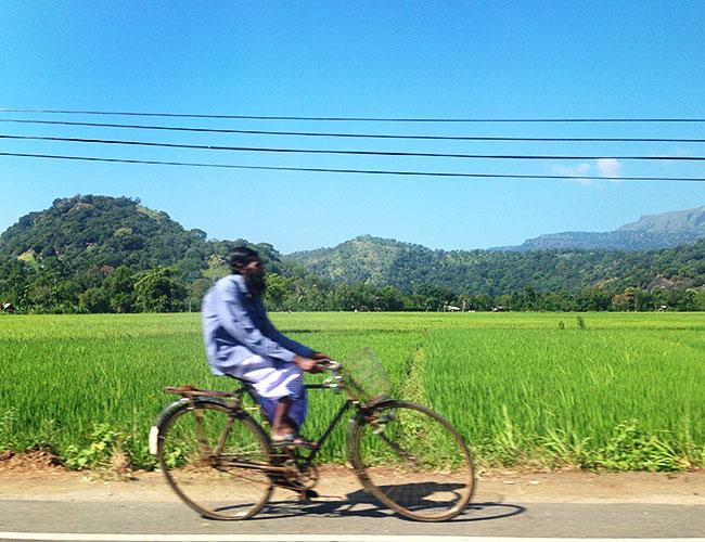 Life alongside the paddy fields, Yala to Galle