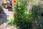 armory_garden