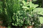 ingham-regional-garden
