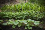 olivet-baptist-garden