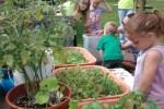 maple-valley-school-traveling-garden