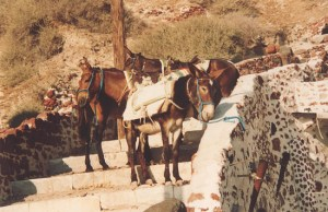 Donkeys at the steps in Santorini
