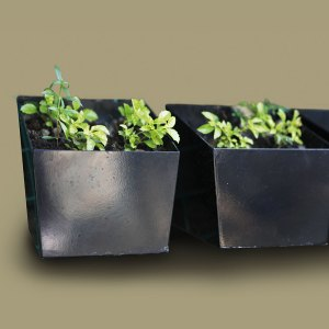 Planter Boxes Greenergy Ventures