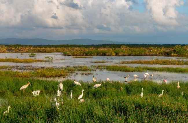 Wading Birds en route to Cockscomb Basin Wildlife Sanctuary, Belize