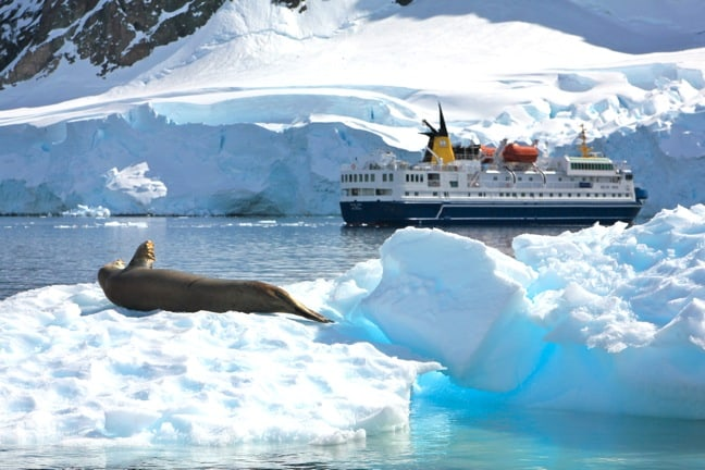 Crabeater Seal on an Iceberg in Antarctica