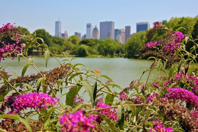 A Green View of New York City From Central Park Lake