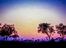 Londolozi Sunset