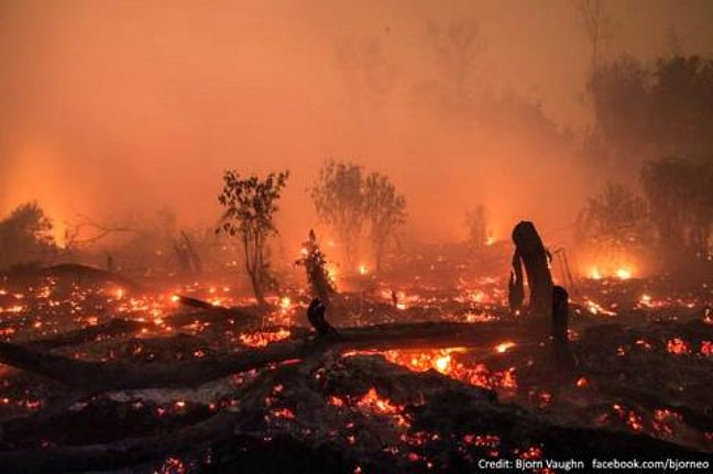 Fires in the Orangutan's forest by by Bjorn Vaughn