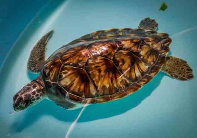 Sea Turtle Inc Tour