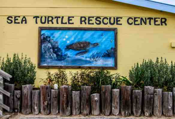 Sea Turtle Inc Turtle Rescue Center in South Padre Island, Texas.