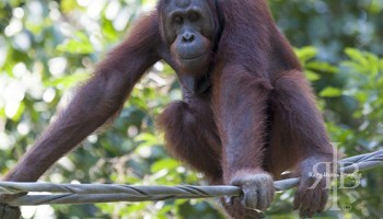 The Top 5 Things to Do in Sabah, Borneo (For Nature Lovers)