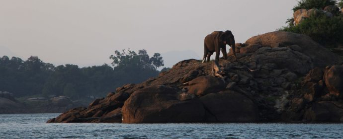 Sri Lanka Wildlife- Elephant by the water