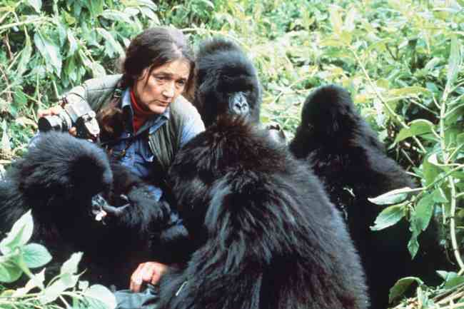 Dian Fossey with Mountain Gorillas of Rwanda