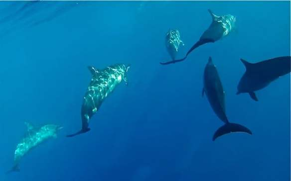 A pod of dolphins swimming near our boat in Moorea, Tahiti