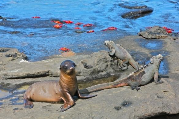 The Galapagos Islands, a Nature Travel Mecca