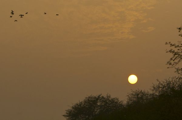 Sunset in Bharatpur