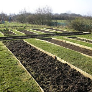 10 Tips for Creating a Budget Vegetable Garden