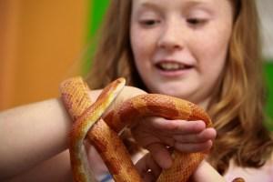 Classroom pet snake