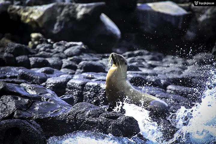 Seal Splash.Jpg