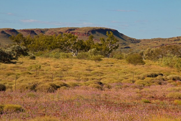 I love the colours in the Pilbara