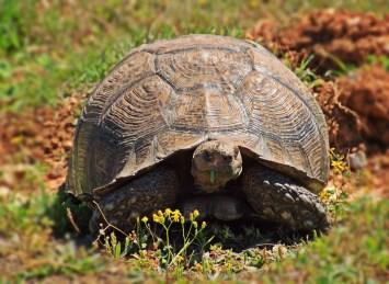 turtle-1234015_960_720