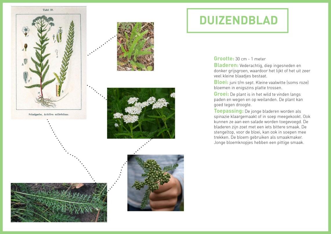 duizendblad - groene avonturen