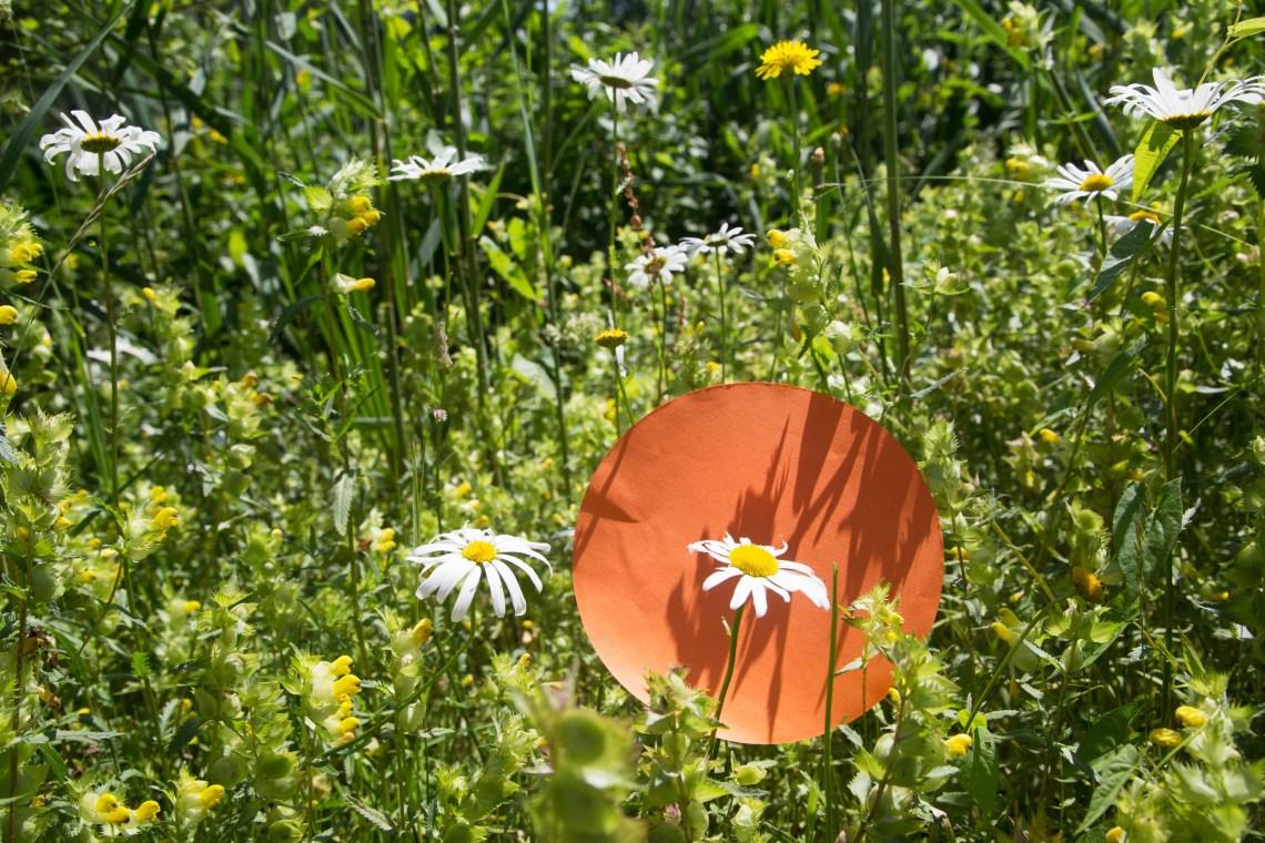 Margriet wildplukken- Groene avonturen