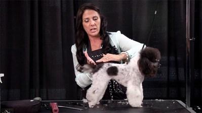 zecco-poodle-demo2