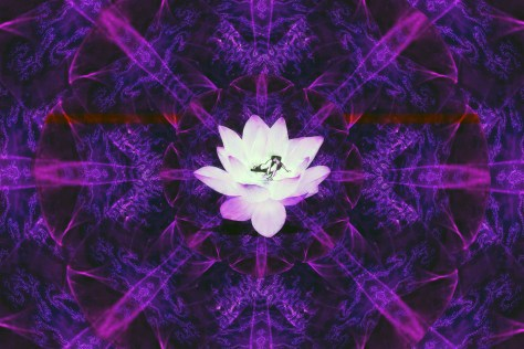 Love in the Heart of the Lotus(R)
