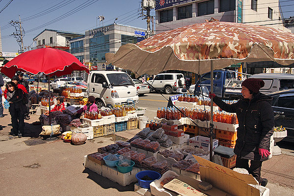 travel cheongdo, get to cheongdo, cheongdo bull fighting festival, korean bullfighting, popular festivals in korea, festivals in korea