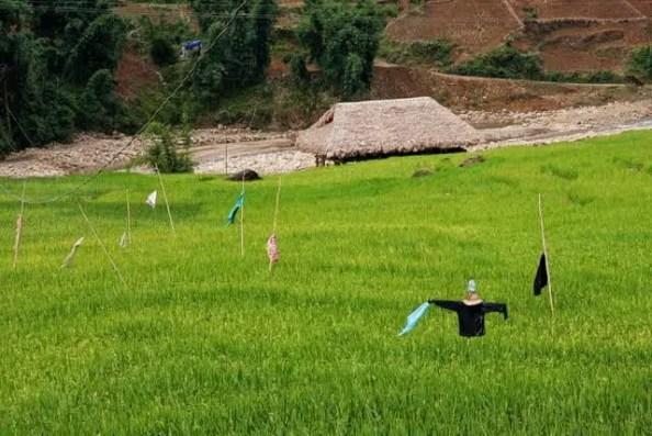 vietnam rice fields, homestay vietnam, tavan village homestay bedding, trekking accomodations sapa valley, sapa valley trekking, trekking sapa, trekking in vietnam, trekking tours vietnam, sapa homestay, tavaan village homestay, hmong village sapa valley