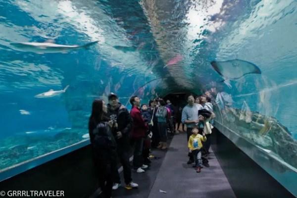 coex aquarium korea