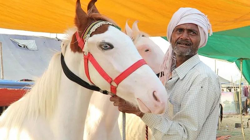 horse camps, pushkar camel fair, pushkar camel festival, camel fair pushkar, camel festival, camel fair india