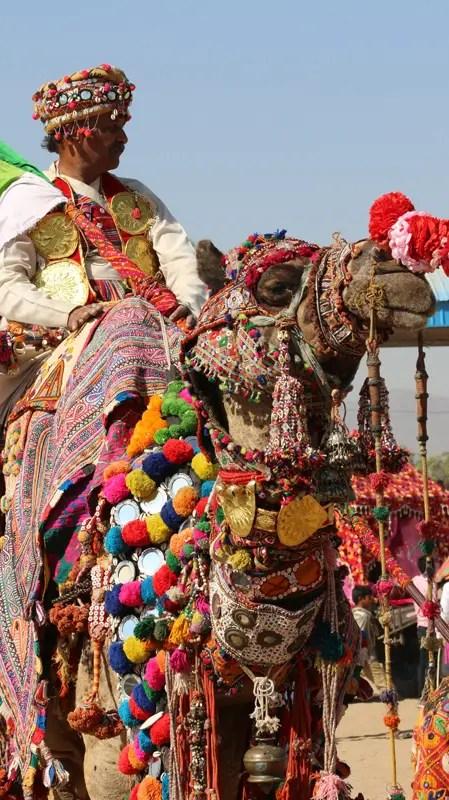 Pushkar Camel Fair Mela Grounds, camel decorating pushkar