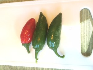 Homegrown jalapeños