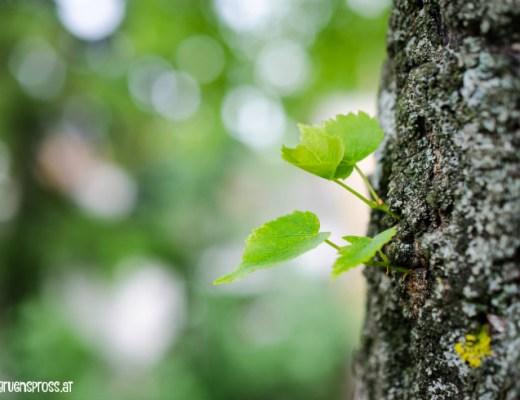 Blätter-am-Baum
