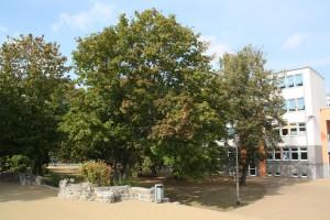 Grüner Schulhof