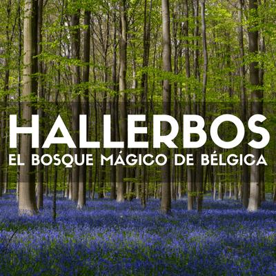Visitar Hallerbos: El bosque mágico de Bélgica