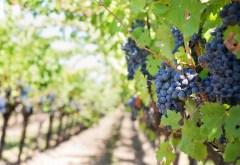 wine-dorgogne-france-featured