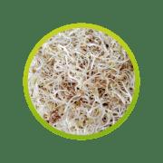 germen-de-alfalfa