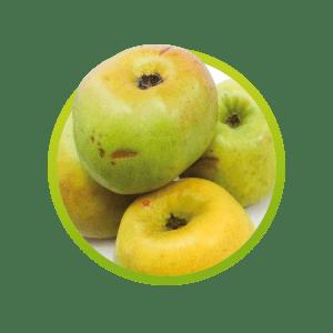 manzana-verde-criolla