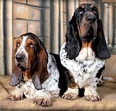 Ces chiens ont un maître