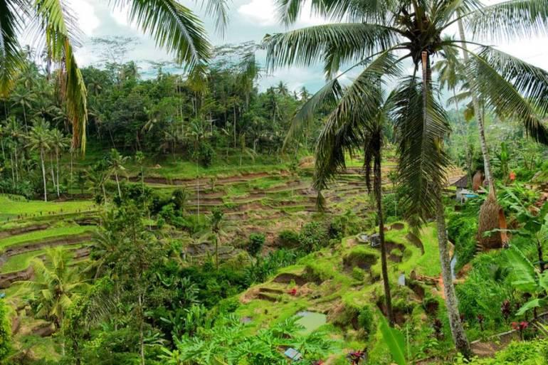 Tropical Forest - Manaslu Circuit