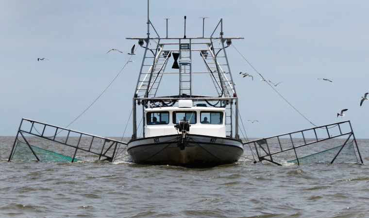SeafoodSource.com:  Gulf Shrimp Prices Soar on Disease Scare, CVDs